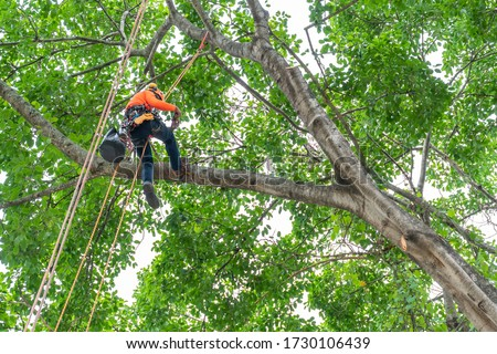 The worker on giant tree ストックフォト ©