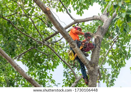 The worker on giant tree Stockfoto ©