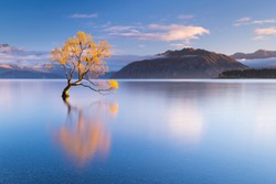 The world famous Wanaka Tree in Autumn with some beautiful morning light not long after sunrise.