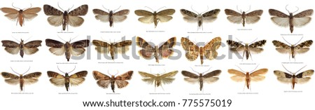 The world most common moths the stores and home pests isolated in high resolution. Names in EXIF properties and under pictures