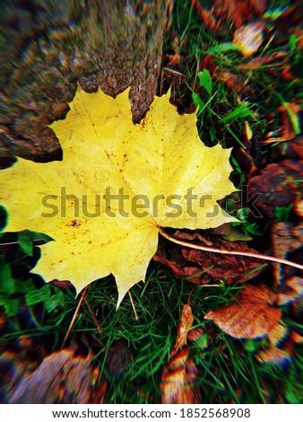 The yellow autumn leaf fell to the ground Zdjęcia stock ©