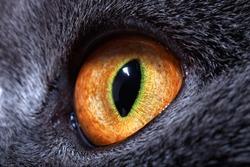 The yellow cat's eye macro