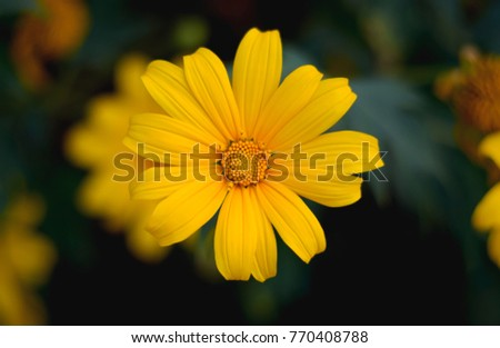 The yellow colour flower in garden closeup ez canvas the yellow colour flower in garden closeup mightylinksfo