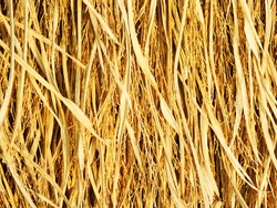The yellow dry straw had fallen into rice before When the farmer took the rice seed out Leaving only the hay