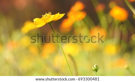 The yellow flower #693300481