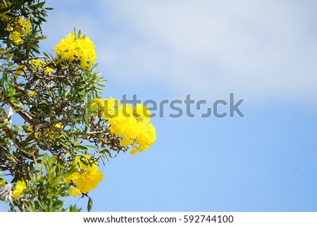 The yellow flowers with space area of blue sky clouds at the park. #592744100