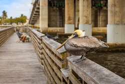 The yellow head pelican stands on the rail of a boardwalk next to a tall bridge while a man is fishing. A pigeon sits between the man fishing in the distance and the pelican in the foreground.