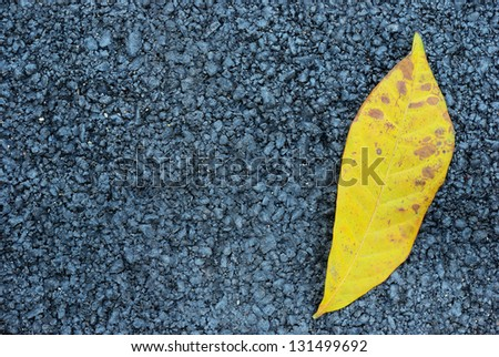 The yellow leaf with asphalt texture background - stock photo