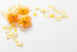 the yellow roses on white background