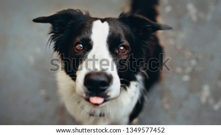 The young, cute and sober dog looks at you with tender eyes #1349577452