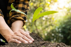 The young man's hands are planting young seedlings on fertile ground, taking care of growing plants. World environment day concept, protecting nature.
