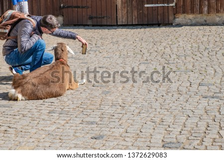 The young man tourist taking selfie picture/photo with animal goat