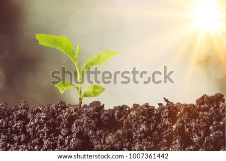 The young seedling are growing - Shutterstock ID 1007361442