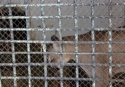 The zoo. An old metal grate made of thick bars and metal mesh. There's an animal in the cage. An animal in captivity.