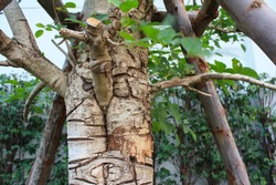 The zoomed picture shows the bark and branches of an alder tree.