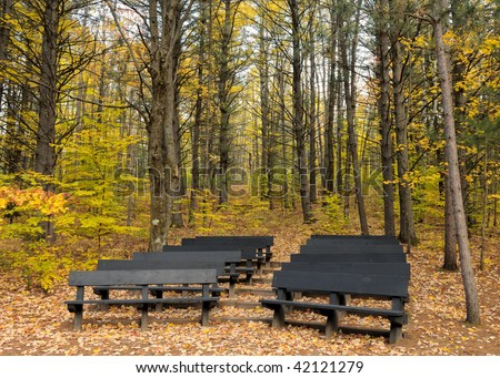 Theater Seats in the Autumn Forest