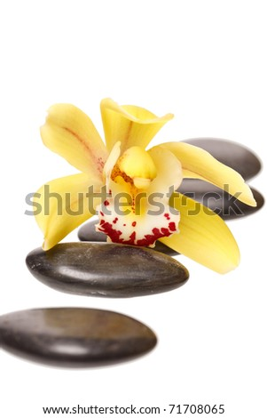 therapy stones and orchid flower