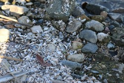 there are a lot of very small shells on the shore of the lake