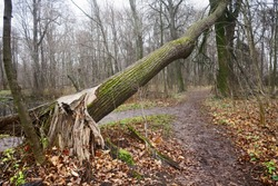 There are broken trees in an old abandoned Park. The wind pulled out trees by the roots out of the ground. Broken tree branches. Demonic, mystical strange and scary place.