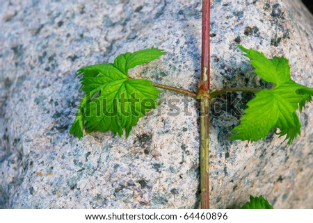 There are green plants on rock wall