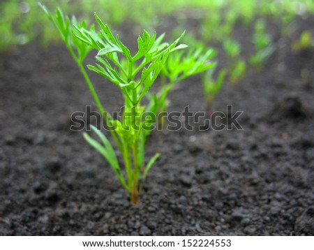 There are green sprout of grass on  ground