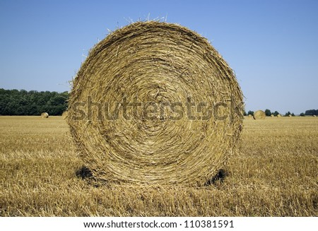 There are many haycocks in the field