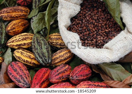 There Are Three Main Cultivar Groups Of Cacao Beans Used To Make ...