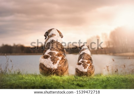 There are two dogs in this picture. They look so cute in this picture. They present a beautiful friendship. Background lake are also looking beautiful.