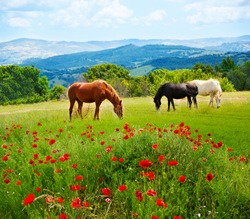 There horses grazing grass in the field with mountains on background and poppy fields on foreground