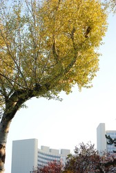 There is a autumnal birch and the UNO-City in Vienna.