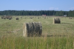 There is a bale of hay lying in the field. A roll of hay is drying in the sun. Agricultural work.