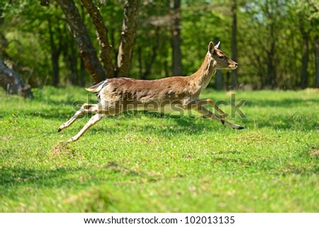 There is a deer in-field