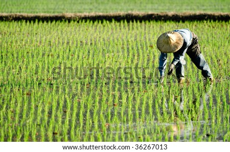 There is a farmer working in the farm.