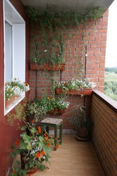 there is a flower garden on the balcony. orange and white flowers grow in boxes and pots, a bindweed grows on the wall, a small patch of forest and blue sky are visible from the balcony