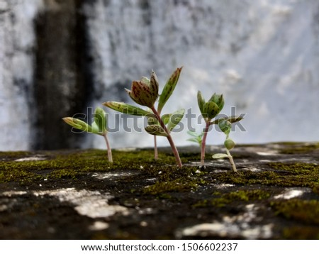 There is a small plant which grows on it when it grows and it looks very beautiful. #1506602237