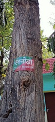 There is a tree in this picture and name of the tree written on the tree in Hindi and English.Name of the tree in English is Chordia Dichotoma and in Hindi it's called Lasoda