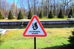 There is a triangular sign in the park, which depicts a squirrel, and in Russian it says: Caution, squirrels