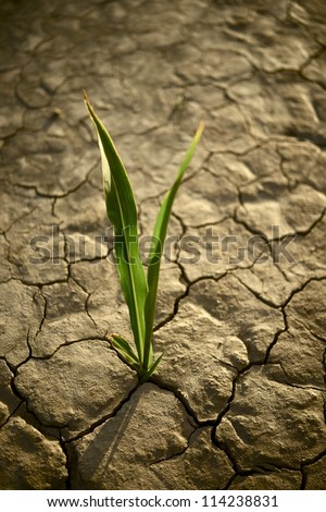 There is Hope. Small Plant on the Cracked Dry Land. Drought Photo Collection.