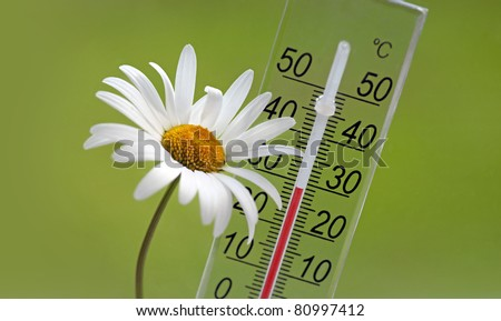 Thermometer and white daisy on green background