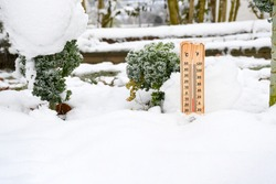 Thermometer in winter garden present temperatures under zero degrees, background green plant and white snow,winter's life in europe in frosty and the weather is very cold