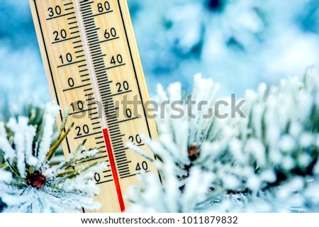 Thermometer in winter weather on pine branch. Wooden thermometer shows minus degree.