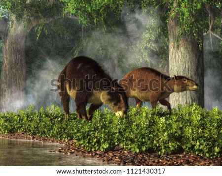 These are Eohippus, or