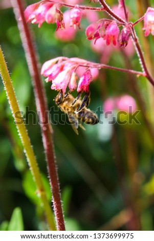 These are pictures of insects took in the nature. They are pollinate the flowers and fly over the plants
