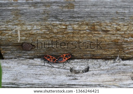 these insects photographed on a log when they basked in the sun #1366246421