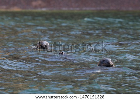 These seals were taking a peek at who was taking their picture