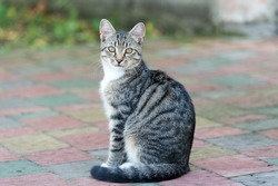 They deserve the love. outbred cat sit on road. domestic animal. pet sitting outside. vet and veterinarian. purebred and pedigreed. mestizo pet. cat in street. fluffy kitten outdoor. homeless animals.