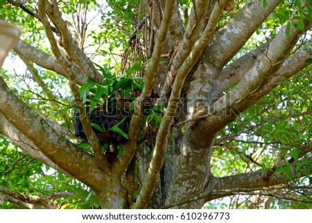 Thick branches outward of a tree, growth expansion concept