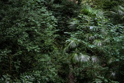 Thick bright green wet vegetation in the humid jungle wet forest