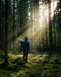 Thick dark forest with moss and sun rays shining trough. Male person standing in distance.