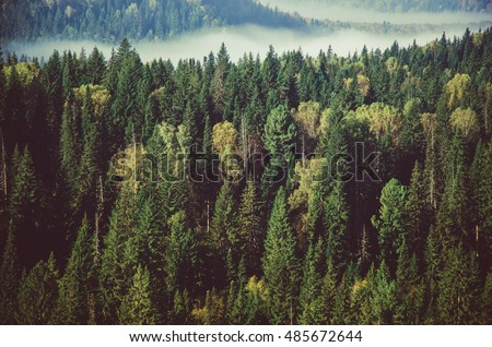 thick fog covered with thick coniferous forest.